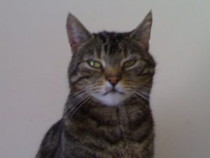 Cats are supposed to be expressionless, but Greebo really hated having his picture taken.